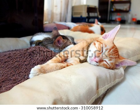 Kitten sleeping at home on a cat bed.