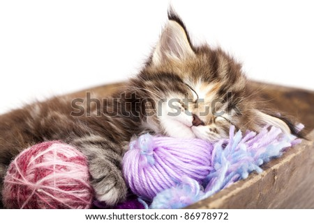 kitten sleeping resting in a basket of balls of yarn - stock photo