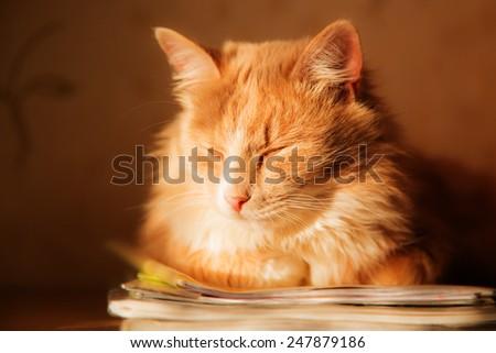 Kitten sleeps prigrevshis home in the sun. - stock photo