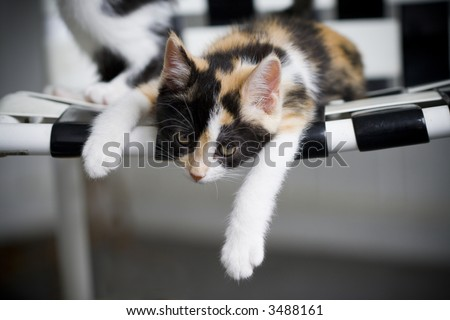 Kitten sprawled on a chair looking lazy - stock photo