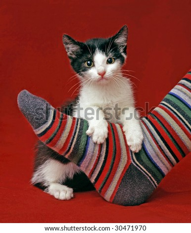 kitten staying behind a stripped sock