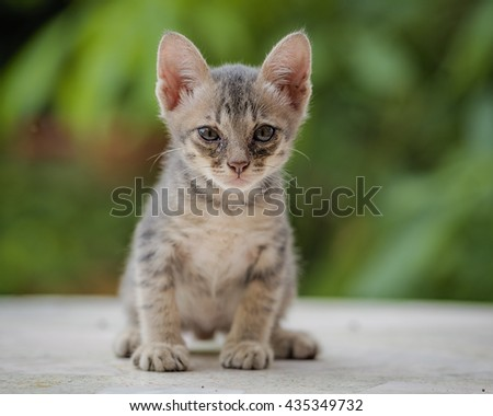Kitten threaten enemies with shock . - stock photo