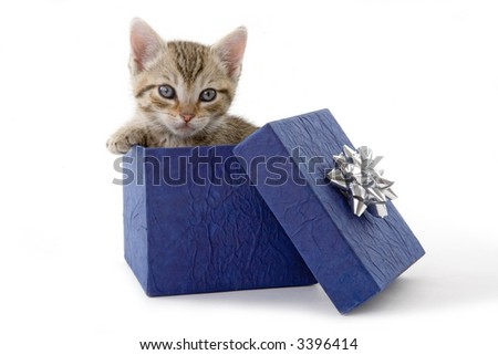 kitten (5 weeks) in a blue gift box - stock photo