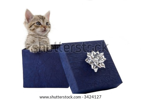 kitten (5 weeks) in a blue gift box - stock photo