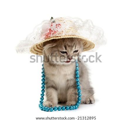 Kitten with a beads and in a hat - stock photo