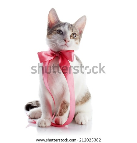 Kitten with a bow. The kitten with a pink tape. Multi-colored small kitten. Kitten on a white background. Small predator. Small cat. - stock photo