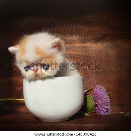 kitten with a flower - stock photo