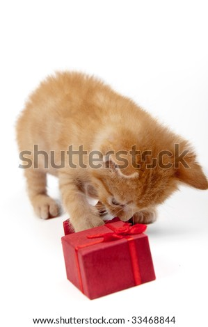 kitten with a red gift box - stock photo