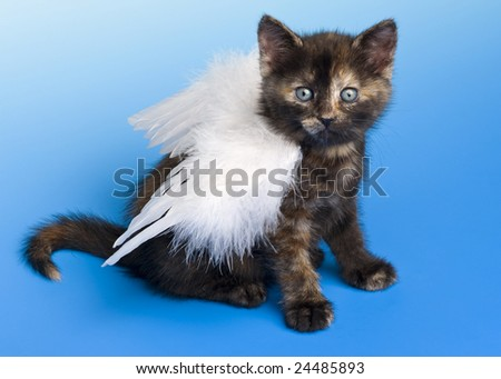 Kitten with angel's wing on blue background - stock photo