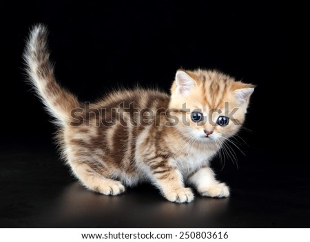 kitten with big eyes - stock photo