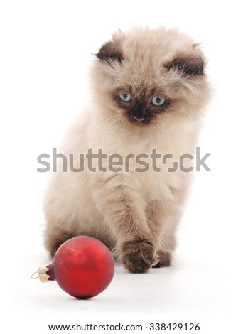 Kitten with Christmas decoration on a white background.