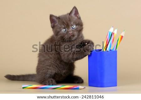 Kitten with pencils - stock photo
