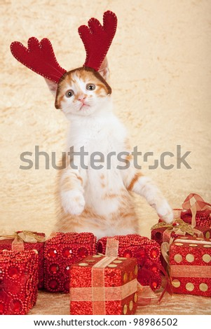 Kitten with reindeer antler horns hat and christmas gifts on beige background