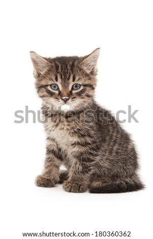 Kitten with sour cream on his lips isolated on white - stock photo