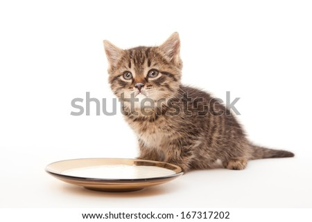 Kitten with sour cream on his lips looking up - stock photo