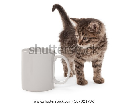 Kitten with white cup isolated on white - stock photo