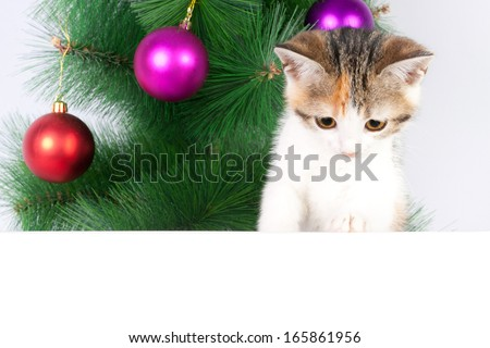 kitten with white message text box for Christmas decoration