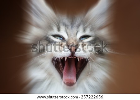 Kitten yawning mouth wide open. - stock photo