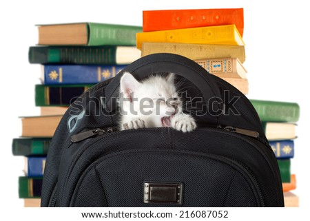 Kitten yawns after sleep. kitten sitting in a school backpack.  isolated. - stock photo