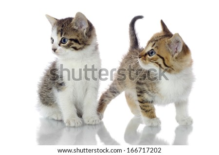Kittens  - stock photo