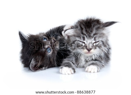 Kittens. Age - 1 month - stock photo