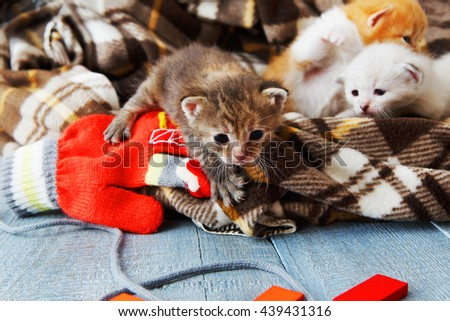 Kittens and mittens. White, ginger and grey newborn kittens in a plaid blanket. Sweet adorable tiny kittens on a serenity blue wood play with cat toy and mittens. Funny kittens crawling and meowing - stock photo