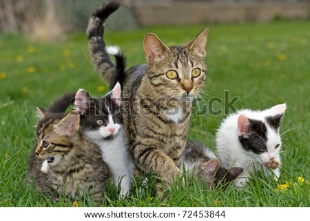 Kittens and mother cat. - stock photo
