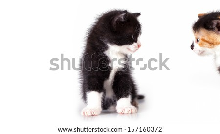 kittens are observed - stock photo