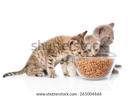 kittens eating dry food. isolated on white background - stock photo