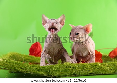 Kittens in a basket - stock photo