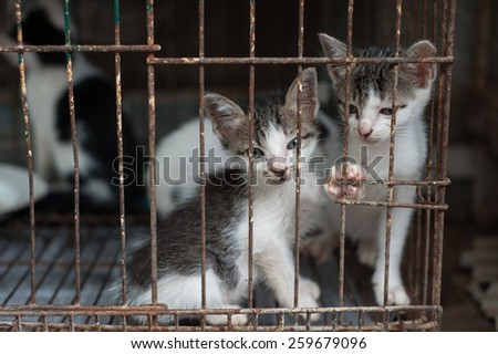 Kittens in a cage - stock photo