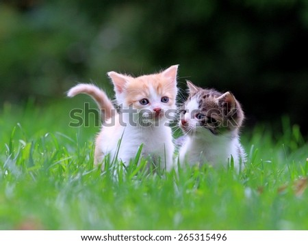 kittens in the garden