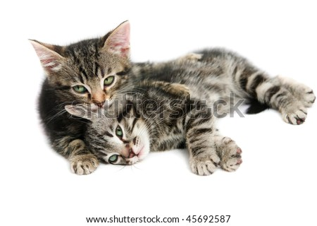 Kittens - isolated on white - stock photo