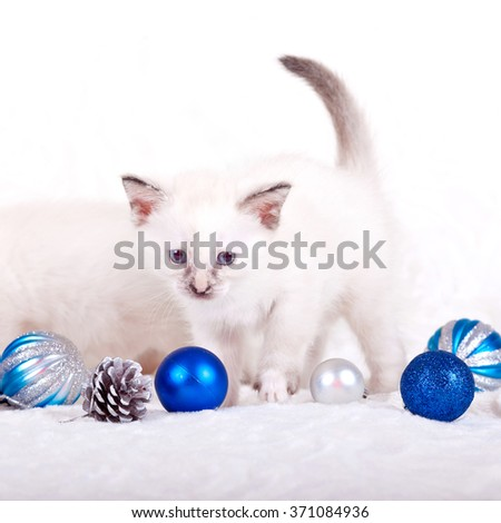 Kittens on white background - stock photo