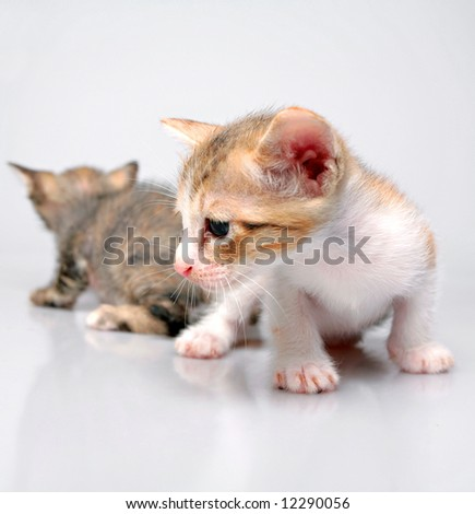 Kittens play over white background - stock photo