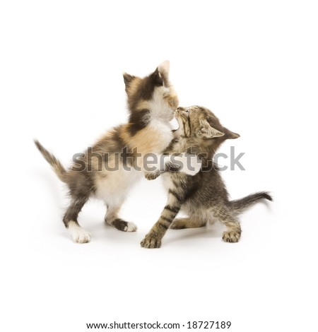Kittens playing on white background
