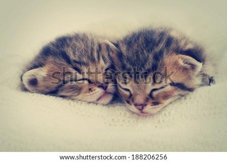 kittens sleeping - stock photo