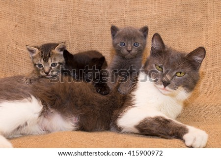 Kittens with mom cat - stock photo