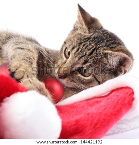 Kitty and Christmas decorations. - stock photo
