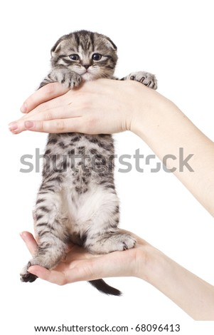 Kitty in hand in whole growing