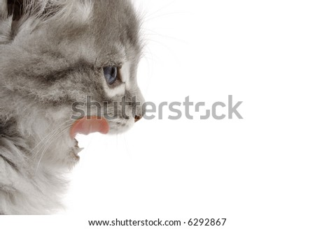 kitty licking his whiskers over white background - stock photo