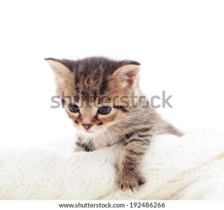 kitty on white background - stock photo