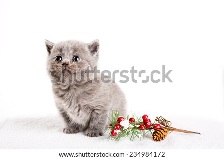 kitty pet baby sweet cat