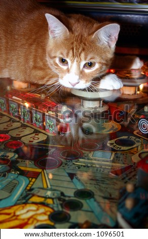 kitty pinball - stock photo