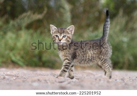Kitty with tail up - stock photo