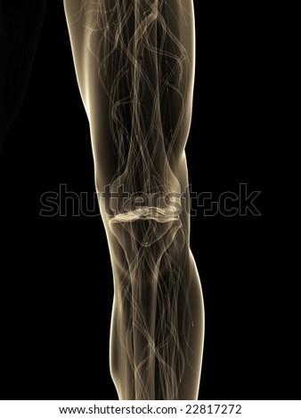 knee - stock photo