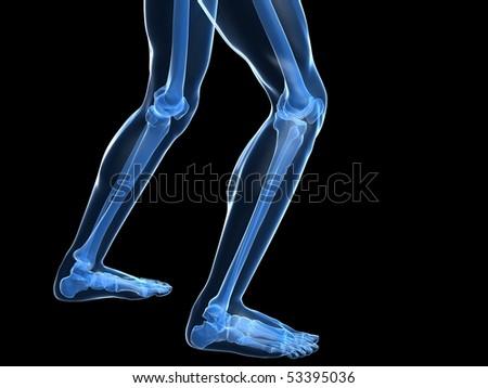knee illustration - stock photo