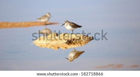 Knot Bird - stock photo