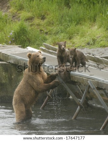 Kodiak Bears - stock photo