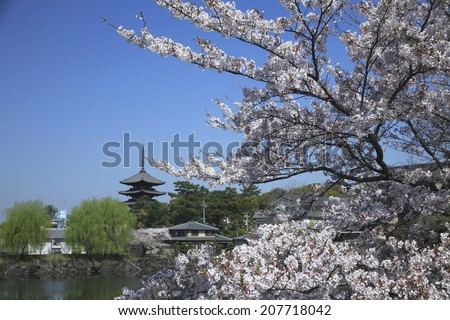 Kofuku Temple With Cherry Blossoms